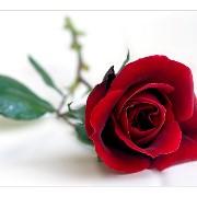 FIORERIA LA ROSA ROSSA logo