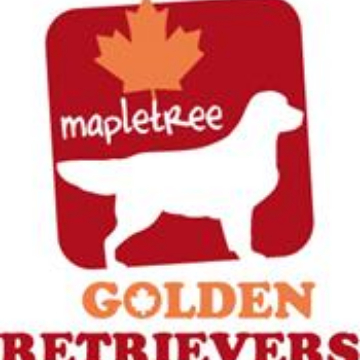 mapletree golden logo