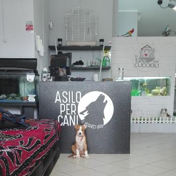 La Tana dei Cuccioli di Minniti Andrea logo